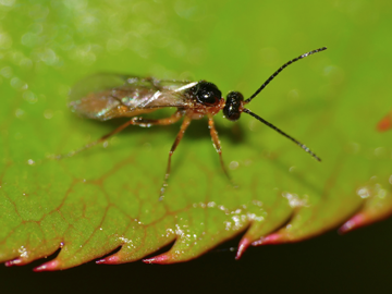 wasp on a leaf