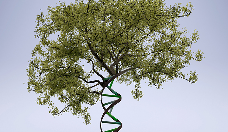 conceptual image -- double helix as tree trunk